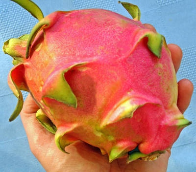 How to pick and eat Dragon Fruit!   Im so excited for this summer, I wanna try one so bad!