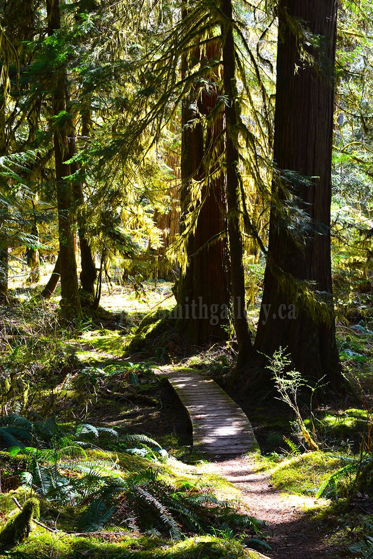 Antler Lake trail winding through an old growth forest provides a serene experience while visiting Gold River. http://www.paulsmithgallery.ca