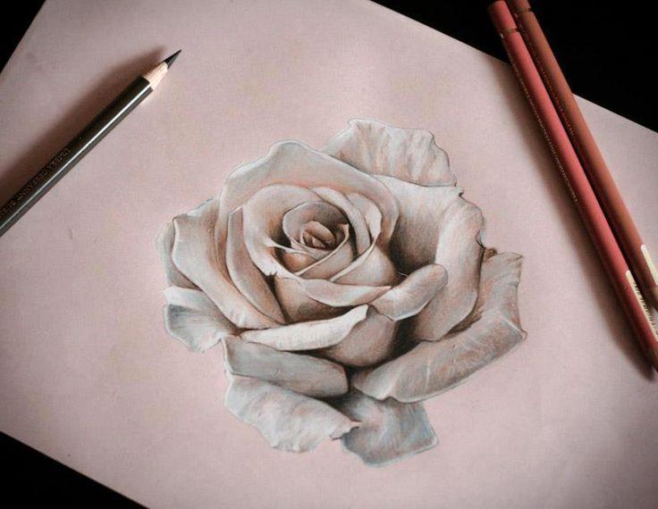 'Rose' Drawing by Karolina Czekaj.   www.shanuke.deviantart.com
