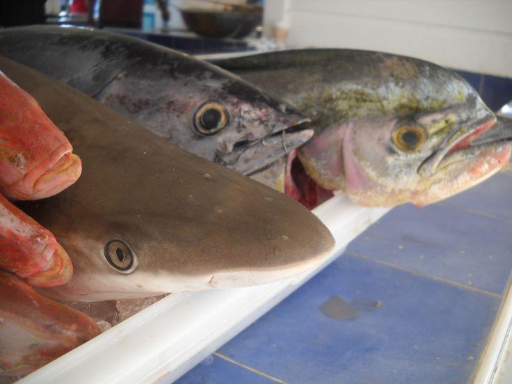 Tiburon, Atun, Mahi Mahi, Fish Market (Marigot - Saint Martin)