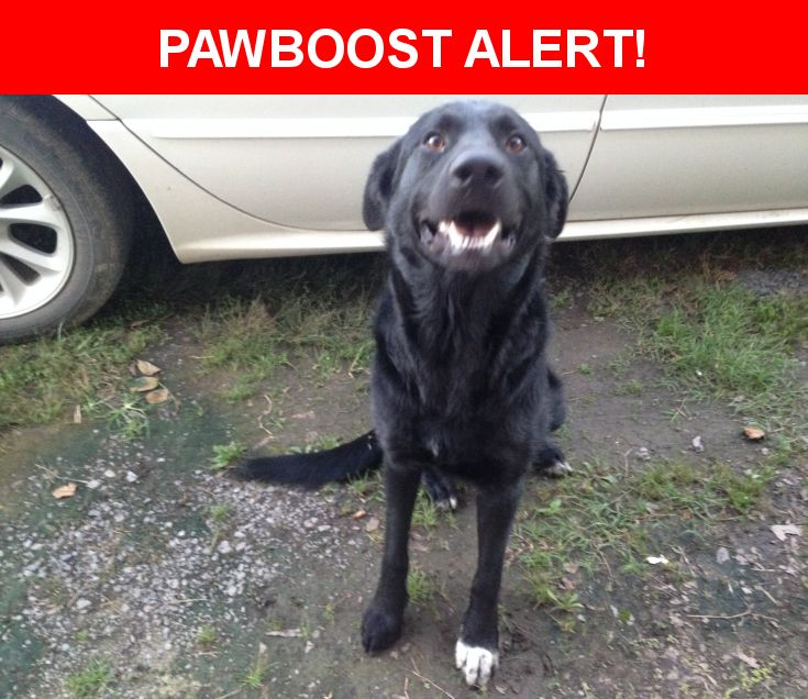 Rescue Dogs Conway Ar