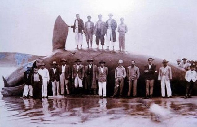 BioOrbis: A Caça às Baleias