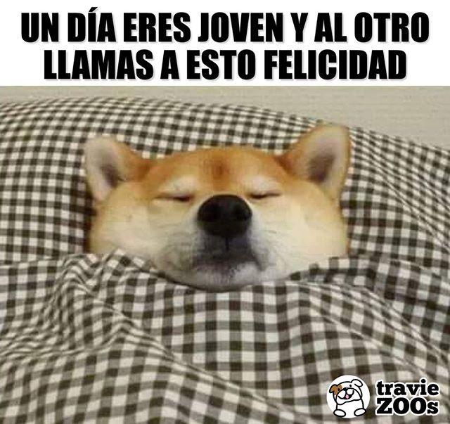 La Delicada Sensacion De Las Sabanas Sobre Mi Carita En Sabado Sleep Dogs Perros Dormir Felicidad Joven Memes De Dormir Memes Perros Perros Durmiendo