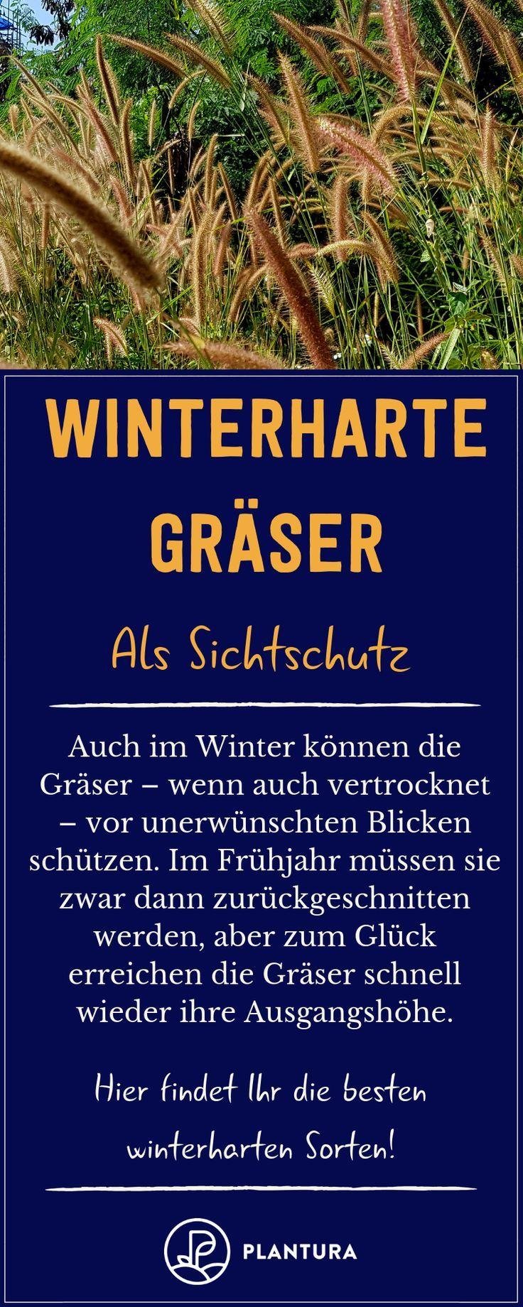 Winterharte Graser Als Sichtschutz Auch Im Winter Schutzen Graser