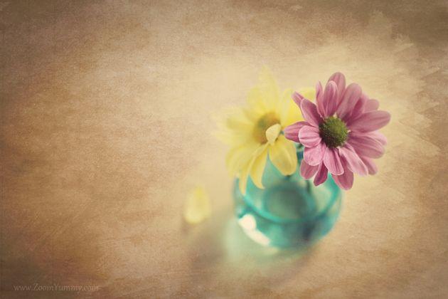 Best 25 flower desktop wallpaper ideas on pinterest mac - Flower wallpaper macbook ...