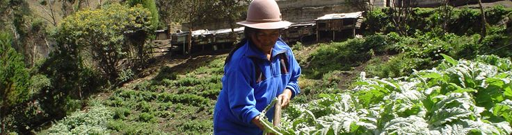 Jumbi Kiwa, Ecuador. Nestled high in the Andean mountains, a group of extraordinary women have organized their communities to produce high quality herbal teas. Taste the unique infusions of aromatic herbs that Jambi Kiwa has been able to cultivate in a country with an amazing amount of biodiversity.