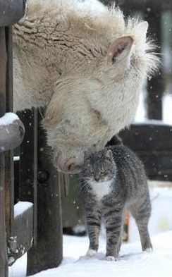 cute animals in the snow friendship heart warming picture