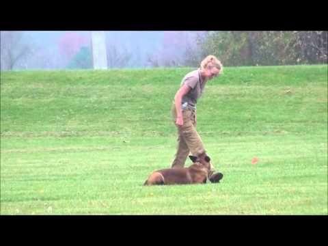 Ipo Tracking Foundation Youtube Dog Training And Fun Stuff Dogs Dog Training Ja Track