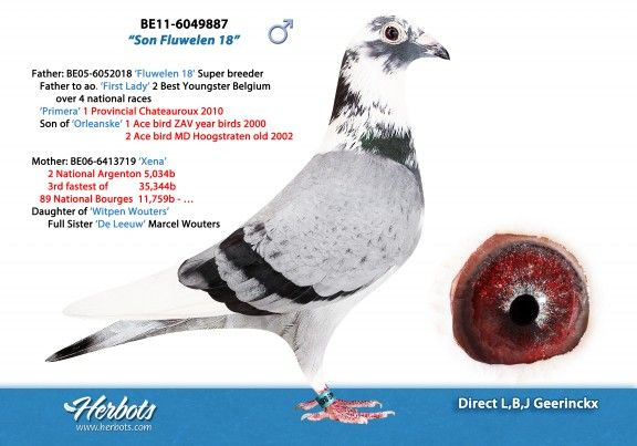 BE11-6049887 • L, B, J GEERINCKX