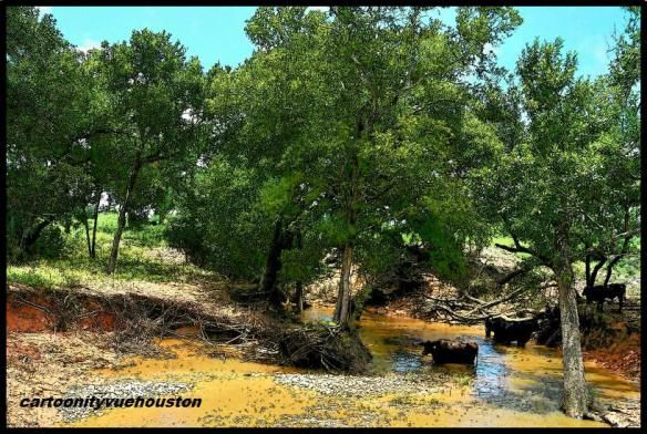 Cows in the Creek - Outside LaWard, Texas