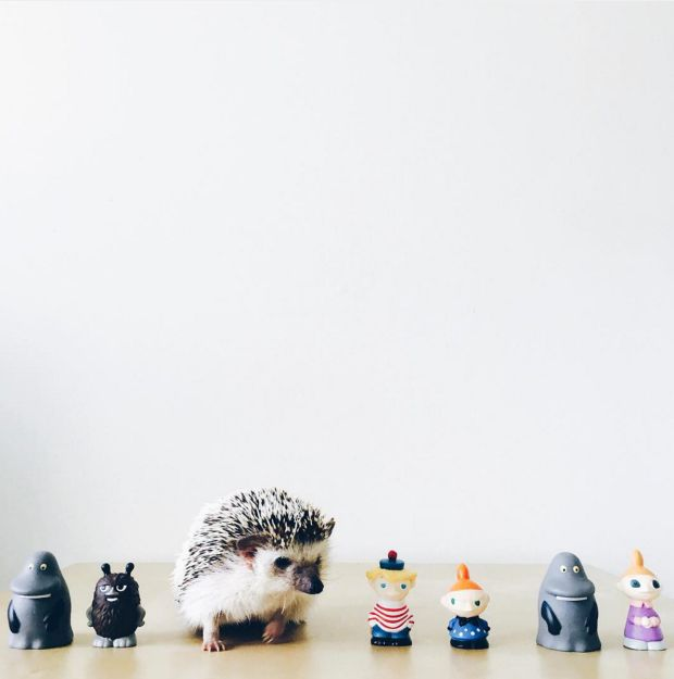 Best Stuff Images On Pinterest Architecture Gifs And Home - This instagram account will satisfy your addiction for adorable hedgehogs