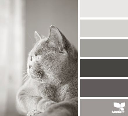 Feline Tones - http://design-seeds.com/index.php/home/entry/feline-tones1