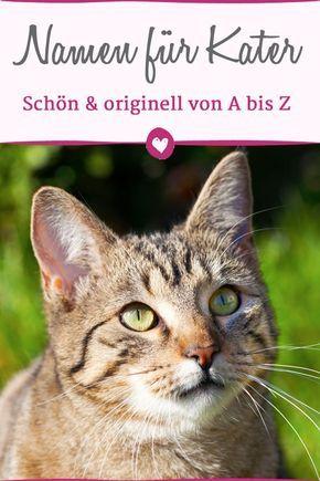 Männliche Katzennamen von A bis Z für Ihren Kater – Katzenregale