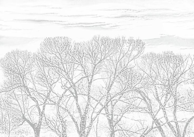 Tree Silhouette in soft gray and white Photography art design by Jennie Marie Schell. #tree#gray#white