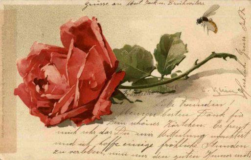 Vintage rose postcard ~ Catherine Klein