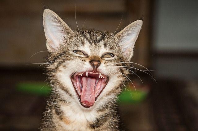 Kauza kočka: Kdo koho a kdy si vlastně ochočil?