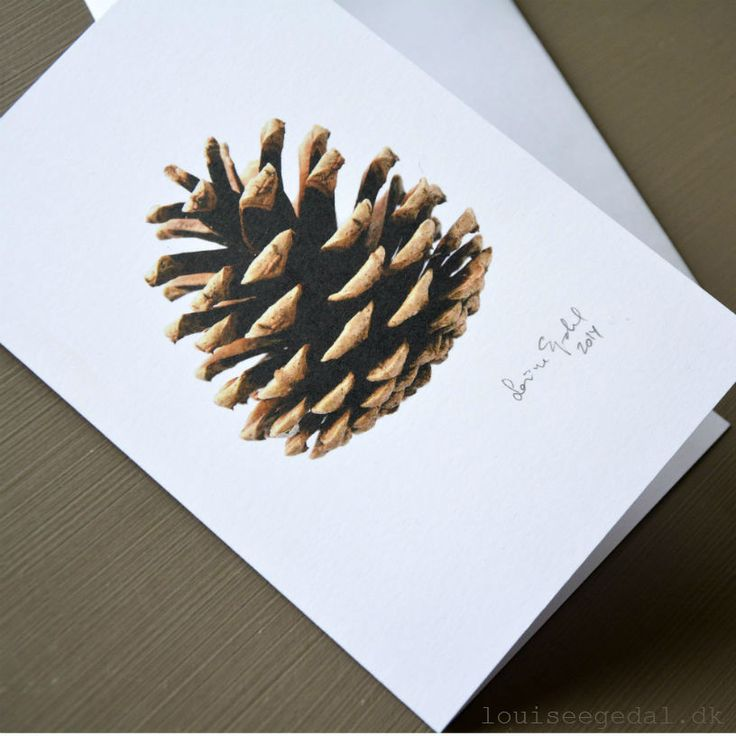 Double postcard, each individually signed by the artist. Envelope incl.Photo and editing by Louise Egedal, printed on heavyweight paper.The cone is found on one of my many walks in the beautiful surroundings of Funen, Denmark. It derives from a 30 years old pine that was planted to provide shelter. Can be used as a gift in itself for framing - all year round, or as a Christmas card.Please note: Discount on the purchase of five pieces - at the checkout please write DISCOUNT i...