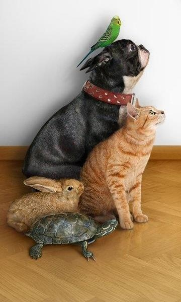 If my hubs would let me, this would so be part of my family picture. Except I might also add a snake and a ferret. ;)