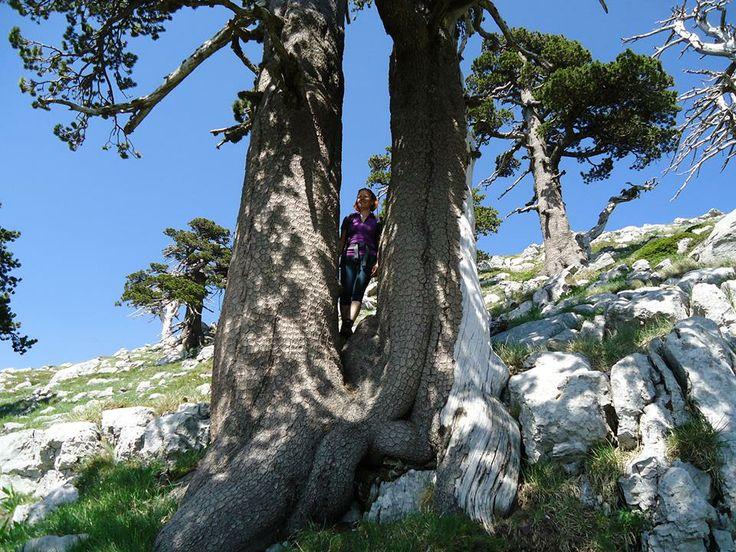 Escursioni - ScegliLaGuida - Isabella Tufaro, Guida Ambientale Escursionistica, #Basilicata Profilo completo (pag.7) : https://www.facebook.com/Escursionismoit/app_493765294042974 Escursionismo.it