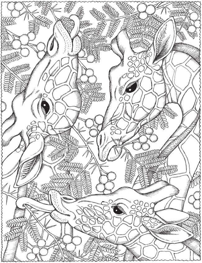 Printable Animal Giraffe Colouring Page