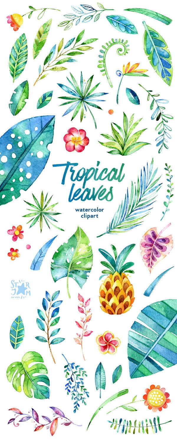 Tropical Leaves. 44 Floral Elements watercolor by StarJamforKids