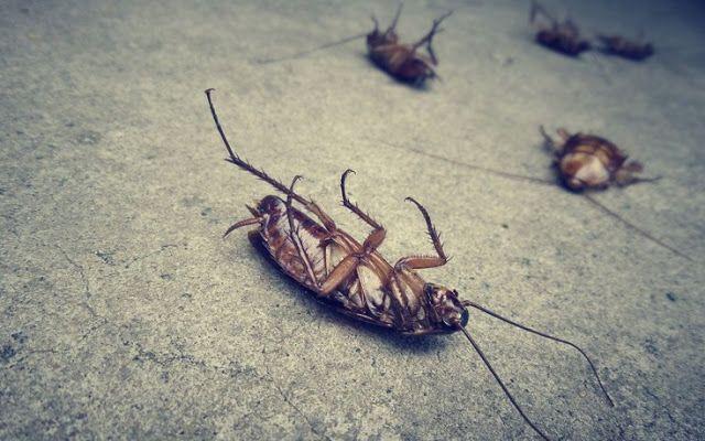 Tα πάντα όλα εδώ News !: Πώς θα απαλλαγείτε από τις κατσαρίδες !