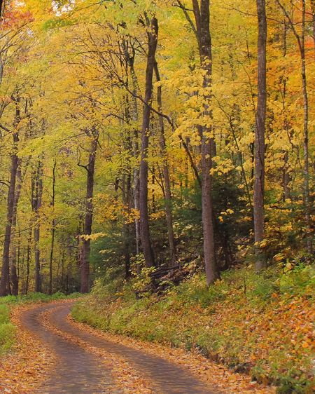 Roaring Fork Motor Trail Photo by Kelly Creech -- National Geographic Your Shot