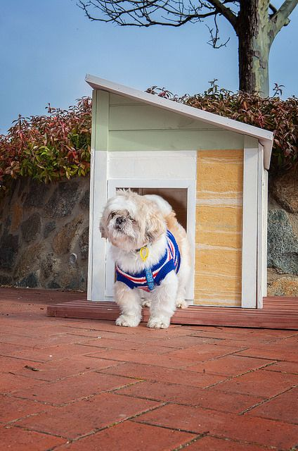 'Welcome to my place!' - Ody greets visitors to his new RitzPetz home