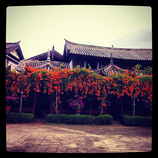 #garden #china #lijiang #yunnan #south #flowers #hotel #oldtown #Padgram