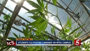 Tennessee: Hemp Research at Middle Tennessee State University Shows Promise