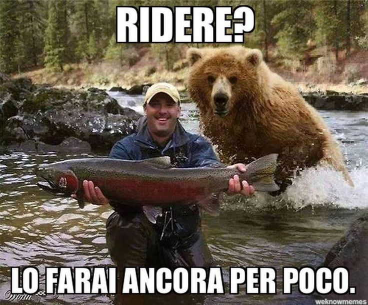 RIDERE? LO FARAI ANCORA PER POCO… http://www.ilpeggiodellarete.it/ridere-lo-farai-ancora-per-poco/ #orso #foto