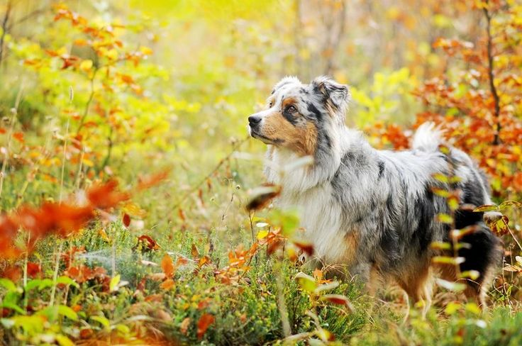 This Photographer Takes The Most Beautiful Photos Of Dogs Enjoying Autumn   – Tiere