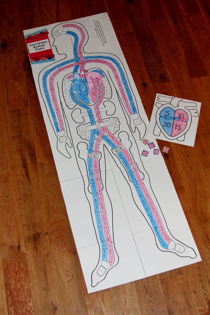 Heart and Circulatory System Activities for Kids ...