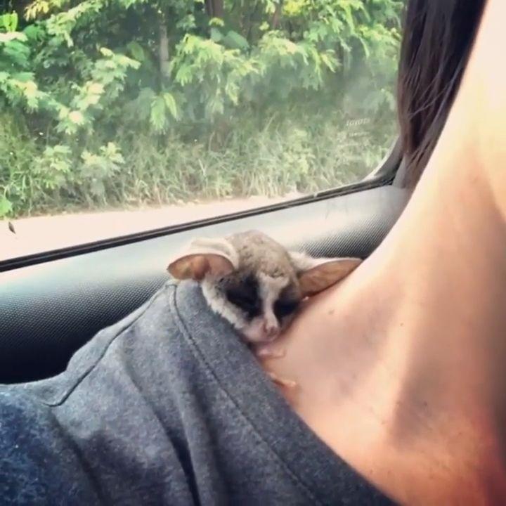 He Loves Sleeping on his shoulder