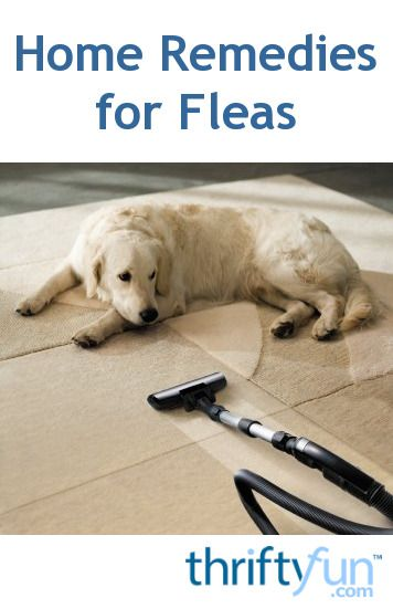 how to get rid of fleas on your dog naturally