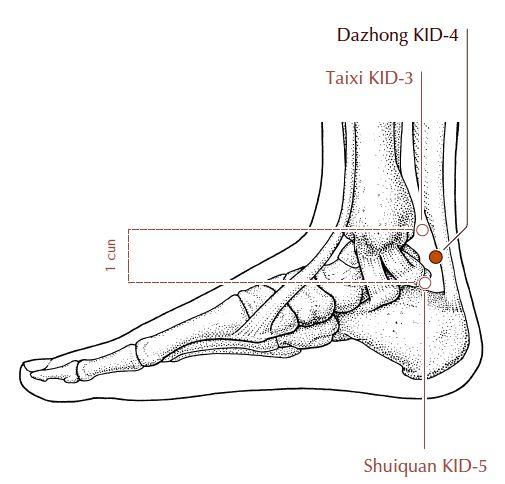 Тай Си расположена в углублении позади косточки внутренней лодыжки. Многие не испытывают никаких ощущений при продавливанииТай Си. Особенно люди со слабым здоровьем. Но при продавливании в области точки остается ямка.