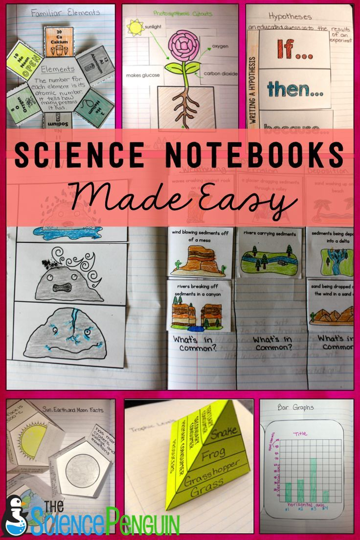 30 best images about Elementary NGSS on Pinterest   See ...