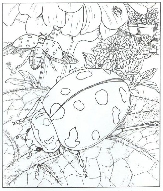Adult Coloring Pages Animal Patterns