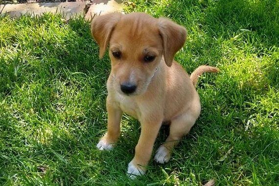 Streunerherzen E V Seltsame Tiere Tiere Hunde