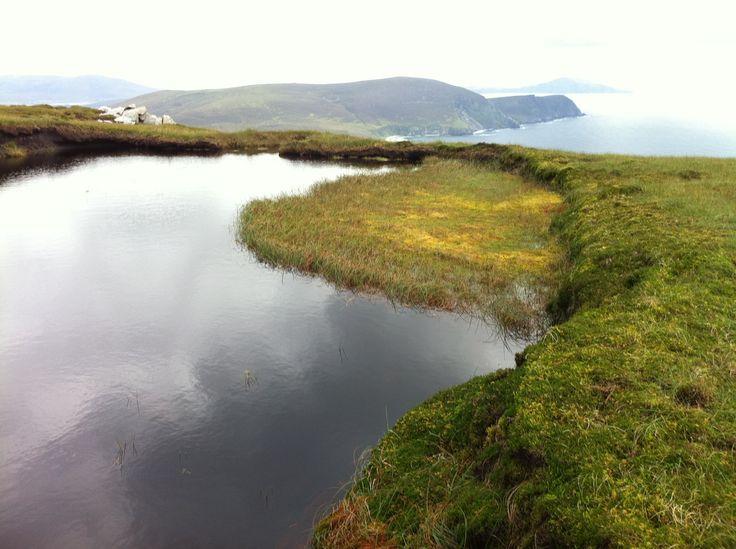 Bog pool, Achill Island, Mayo.