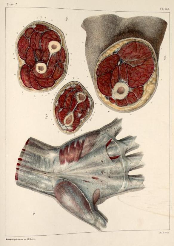 How to study anatomy easily
