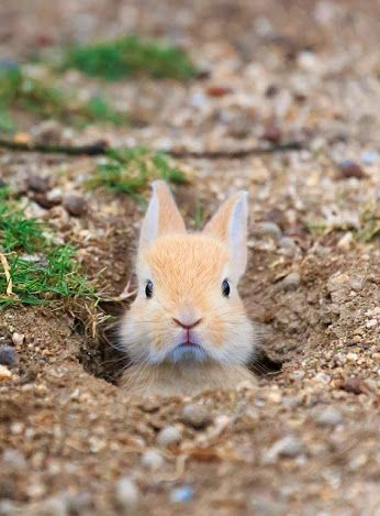 Because we can't have a spring board without a bit of cuteness!   Baby rabbit | spring animals