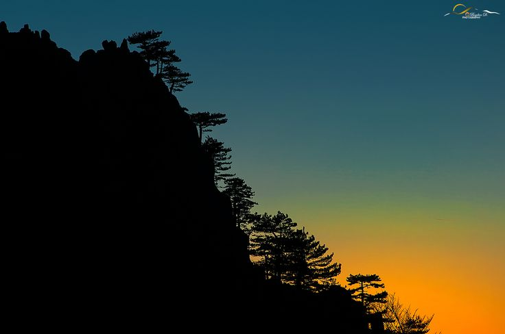 Pinus Nigra - Find out more on: https://bogdandanphotography.wordpress.com/