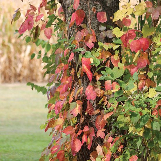 How to Identify, Treat, and Remove Poison Ivy - Farm and Garden - GRIT Magazine