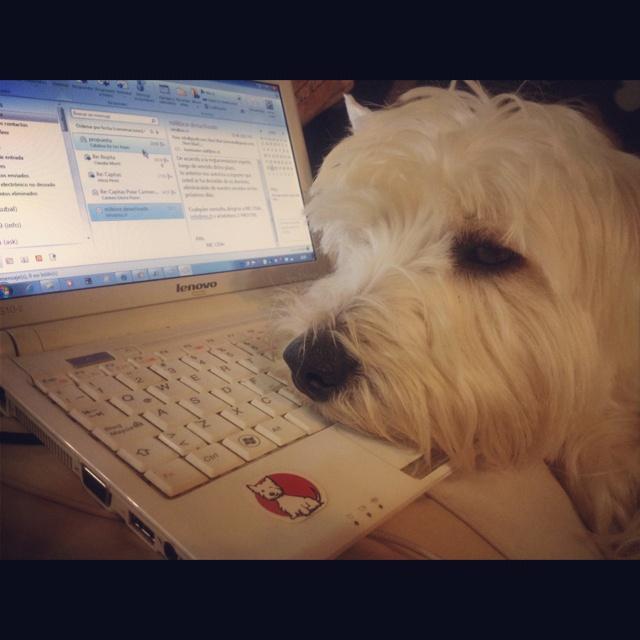 Working like a Dog!!!!