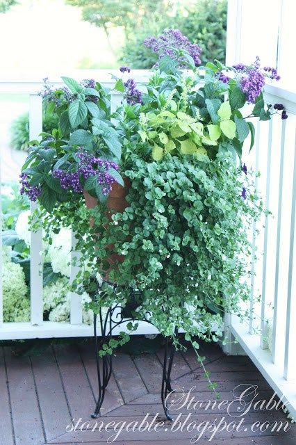 63 best hanging basket shade part sun images on for Front porch hanging plants