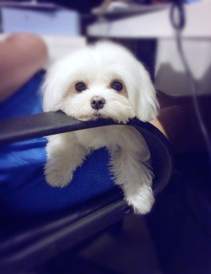 doggie chin ups. The kinda dog I'd take home! So cute
