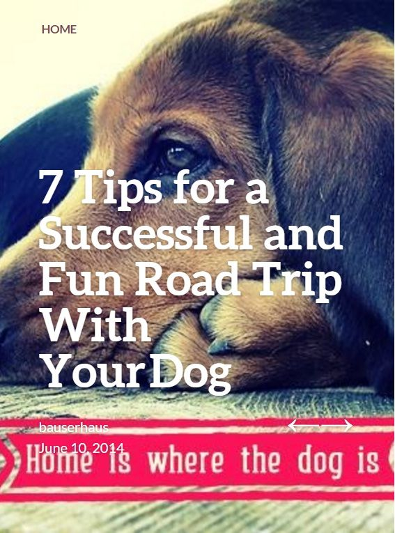 As a pet owner, you know how hard it can be to travel with a pet. Vacations and road trips, though, can be a lot more fun if you share them with your best friend!