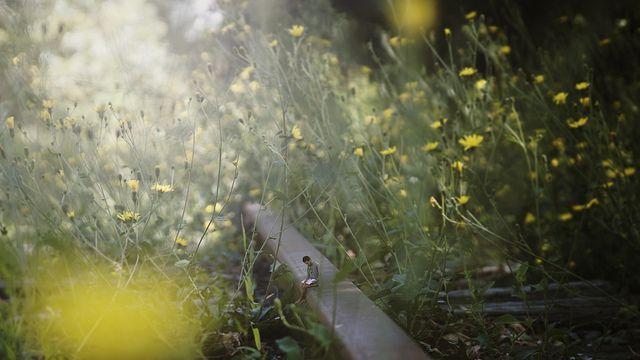 sometimes the summer | Flickr: Intercambio de fotos