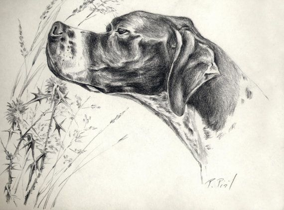 ****************** ORIGINAL ANIMAL ART With LOVE *******************  Your dog immortalized by artist Przemila Kościelna (Pizl)  I will arrange for you original hand drawn portrait of a your dog or another pet on request from your photos  Technique : pencil on paper Size: 8,2 x 11,5 inch = 29,5 x 21 cm or 11,8 x 16,5 = 30 x 42 cm   Animal painting and drawing is my passion and animals are my passion too. In my artworks I want to convey my love.  I offer only the originals because…